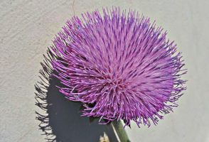 Thistle Flower by PamplemousseCeil