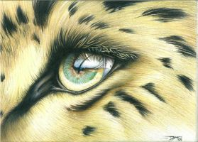 Amur Leopard Eye by DMcAllister