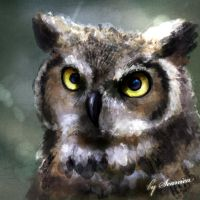 Great Horned Owl by Seanica