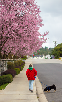 By the Blossoms by EccoingMark