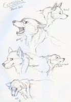 Wolf expressions by moSHypants