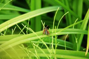 Wasp in the green Paradise by weiserhei