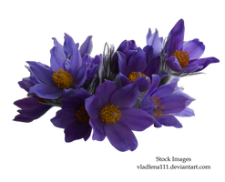 Spring flowers PNG 1 by Vladlena111