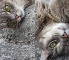 My beloved Pinky Cat II by MADmoiselleMeli