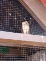 Folsom City Zoo Photo Series 9 by lilly-peacecraft