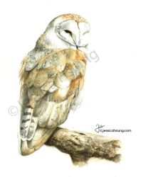 Barnowldeviant by JessicaHsiung