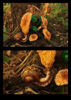 Fungi and snail II by hontor