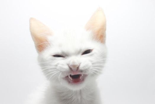 angry cat by designer-brain