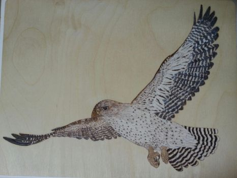 Gyrfalcon in Flight Woodburning by CapturedMuseArt