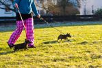 Puppies in motion by mprangenberg