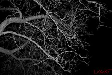 tree in the darkness by LexartPhotos