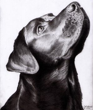 Dogs head LAB A4 Graphite and pencil by Onionsss