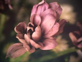Withering Flower by jlgm25