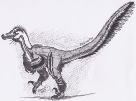 Austroraptor by XenoTeeth3
