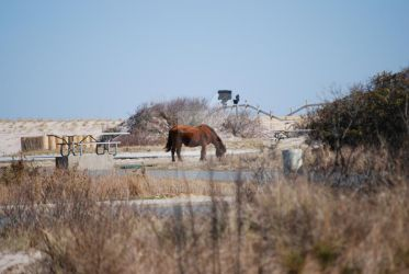 Entering Assateague by debiannj