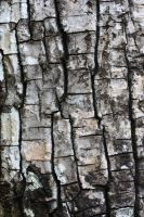 Cracked wood texture Number 2 by Peewee1002-Stocks