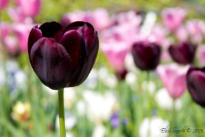 Dark Tulip by Cadaverino89