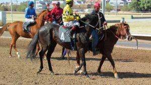 Racehorse Stock 54 by Rejects-Stock