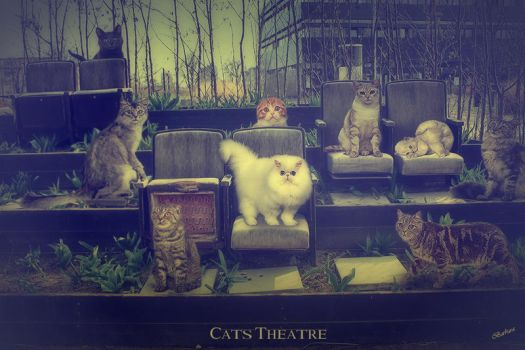 Cats Theatre by barbranz