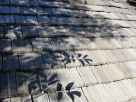 Wooden Shingles by SilverQuill