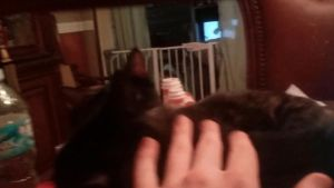 An Automated Kitty Gif From Google Photos by TheSkull31