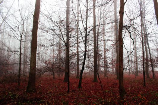 Empty Forest by Caillean-Photography