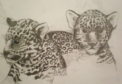 Jaguar Cubs by luce-de-vita