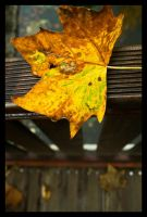 Autumn by arvael18