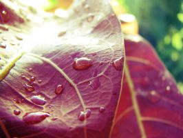 Drops of Autumn by forgetwhatwedid