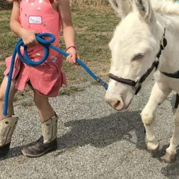 Granddaughter went to Farm Camp last week by lestnill