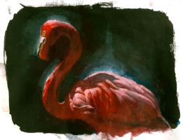 Flamingo by ColinBoyer