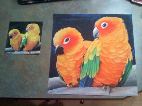 oil pastel sun conures with reference picture by OhHowTypical