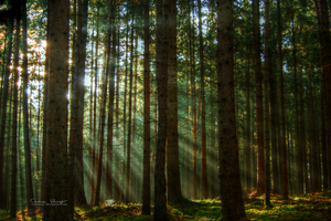 Enchanted forest. by CelticCari