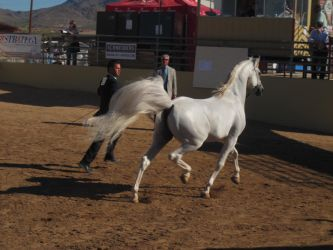 2012 SAHS 69 by whitdawg1221