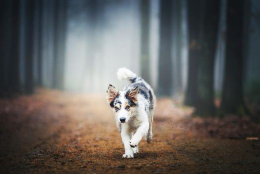 Dog in the fog by KristynaKvapilova