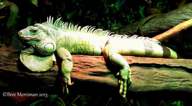 Lizard Lay-About by BreeSpawn