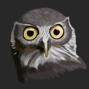 2015.03.20 - Barking Owl Study by Anmaril