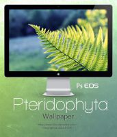 Pteridophyta Wallpaper by Fi3uR