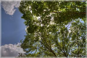 Look up to find leaves by Ankh-Infinitus