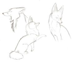 Fox Sketches 3 by Joava