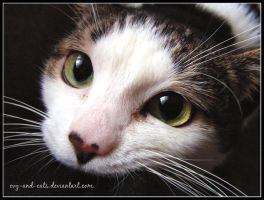 435 by evy-and-cats