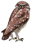 Burrowing Owl by TokoTime