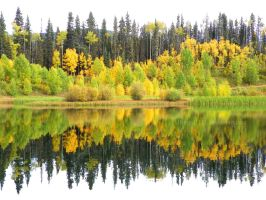 Autumn Reflected by Bimmi1111