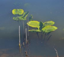 water plants by FrankAndCarySTOCK
