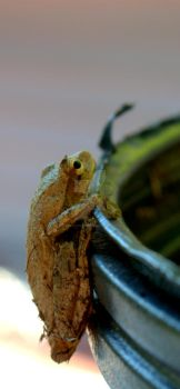 Frog by LadyPhotographer492