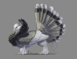 Fancy Pigeon Griffin by comixqueen