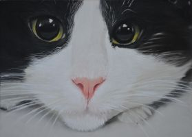 Cat by riksons