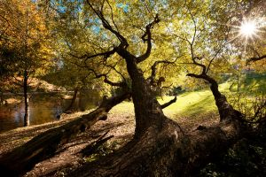Branches by TomFindahl