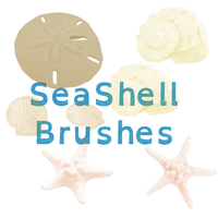SeaShell Brushes by horse14t