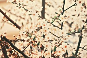 Day 31 - Last blossom by EliseEnchanted